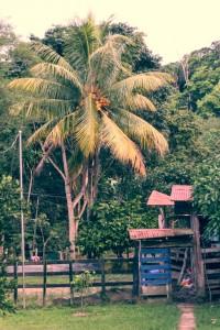 201410 - Costa Rica - 0120