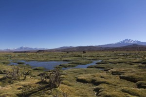 201411 - Bolivie - 0555