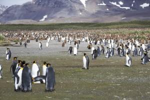 201412 - Antarctique - 0403