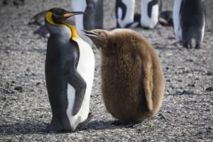 201412 - Antarctique - 0412