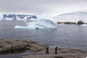 201412 - Antarctique - 0801