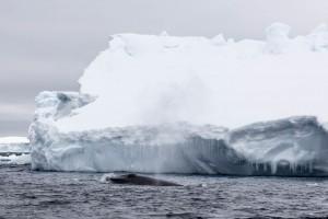 201412 - Antarctique - 1041