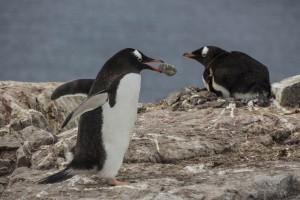 201412 - Antarctique - 1095