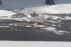 201412 - Antarctique - 1098