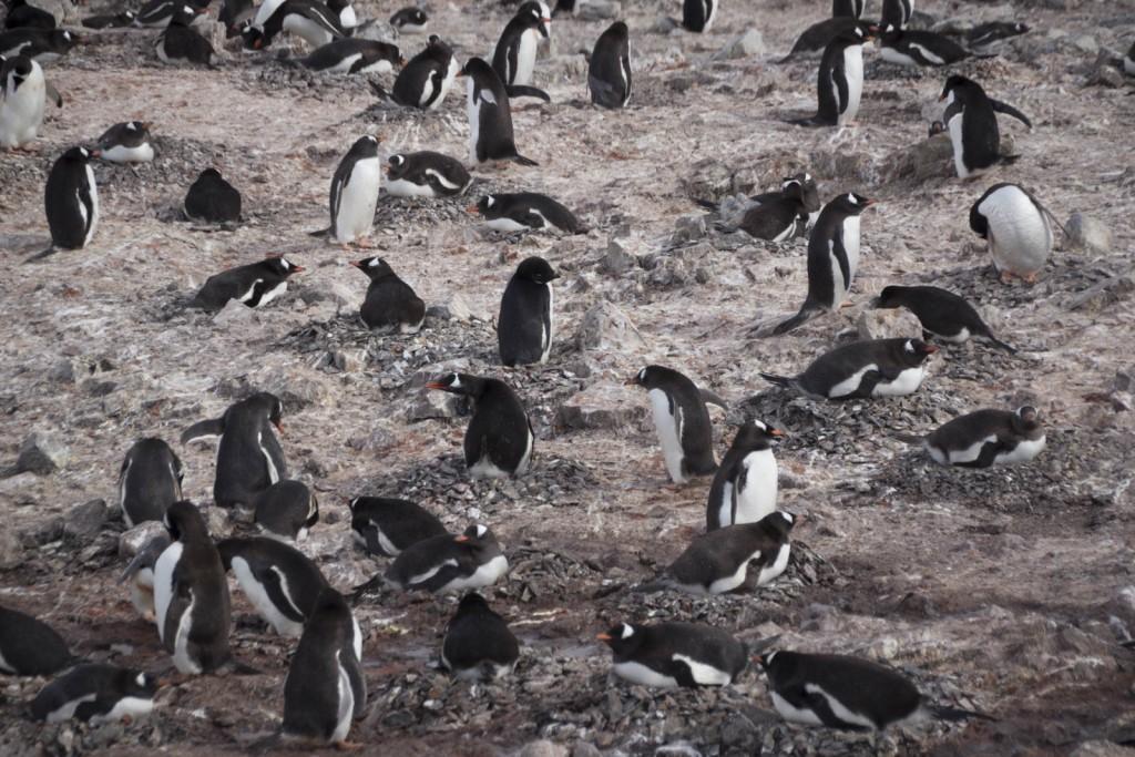 201412 - Antarctique - 1131