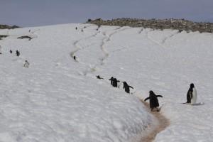 201412 - Antarctique - 1152