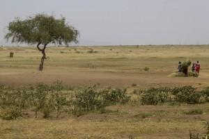 201503 - Tanzanie - 0010