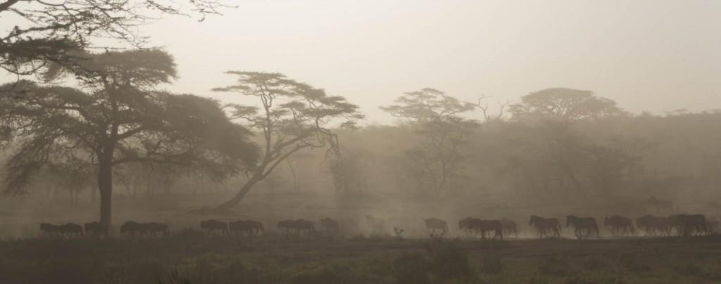 201503 - Tanzanie - 0292