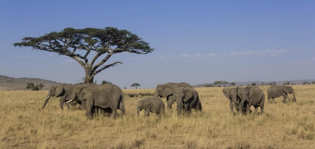 201503 - Tanzanie - 0311