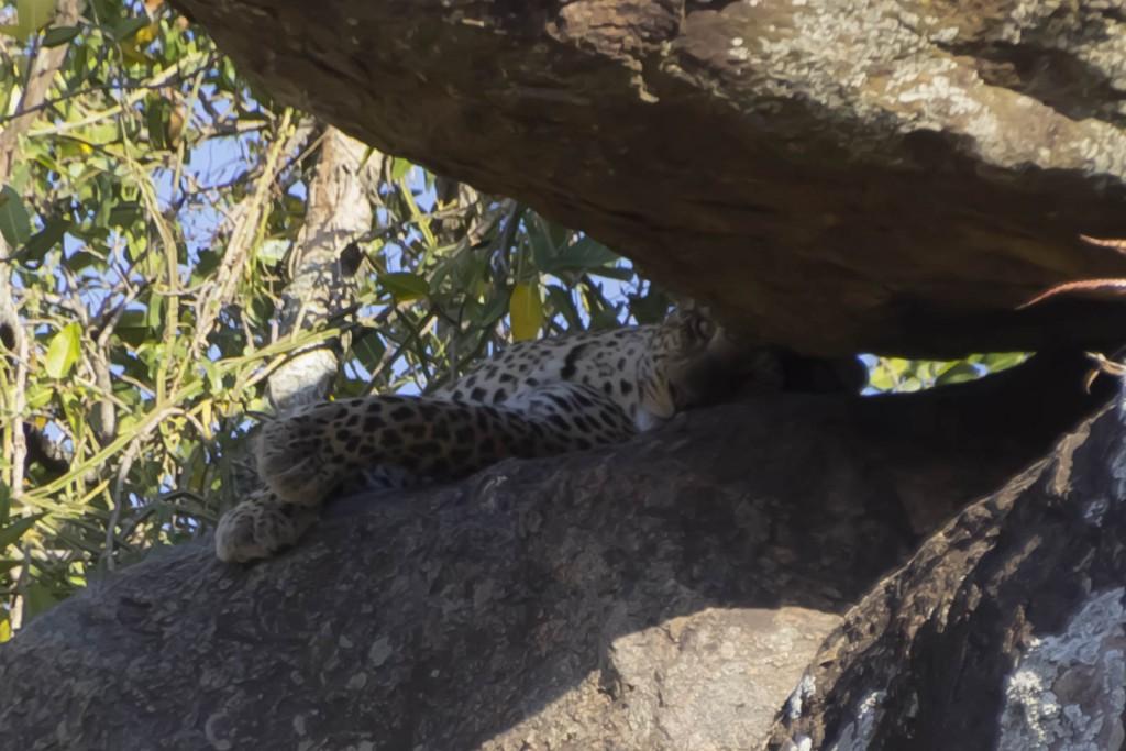 201503 - Tanzanie - 0319