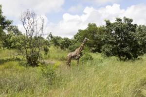 201503 - Tanzanie - 0455