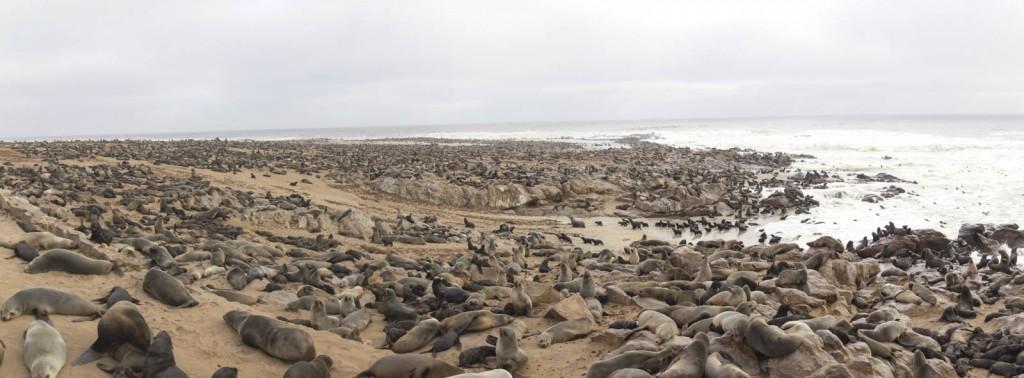 201504 - Namibie - 0372 - Panorama
