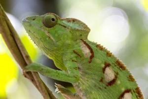 201505 - Madagascar - 0289