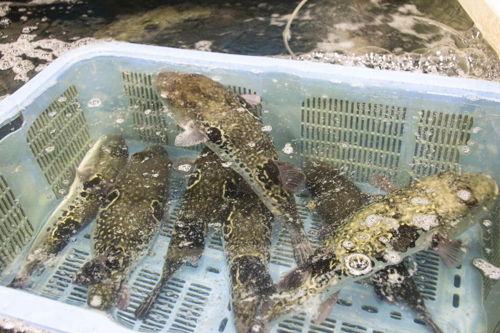 Br ves nippones 13 il est pas frais mon poisson for Vente poisson aquarium particulier