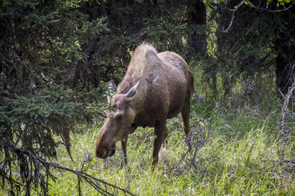 201606 - Alaska and Yukon - 0552